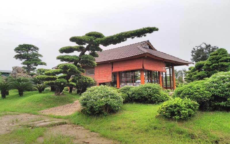 Thiết kế cây xanh ở trong sân vườn